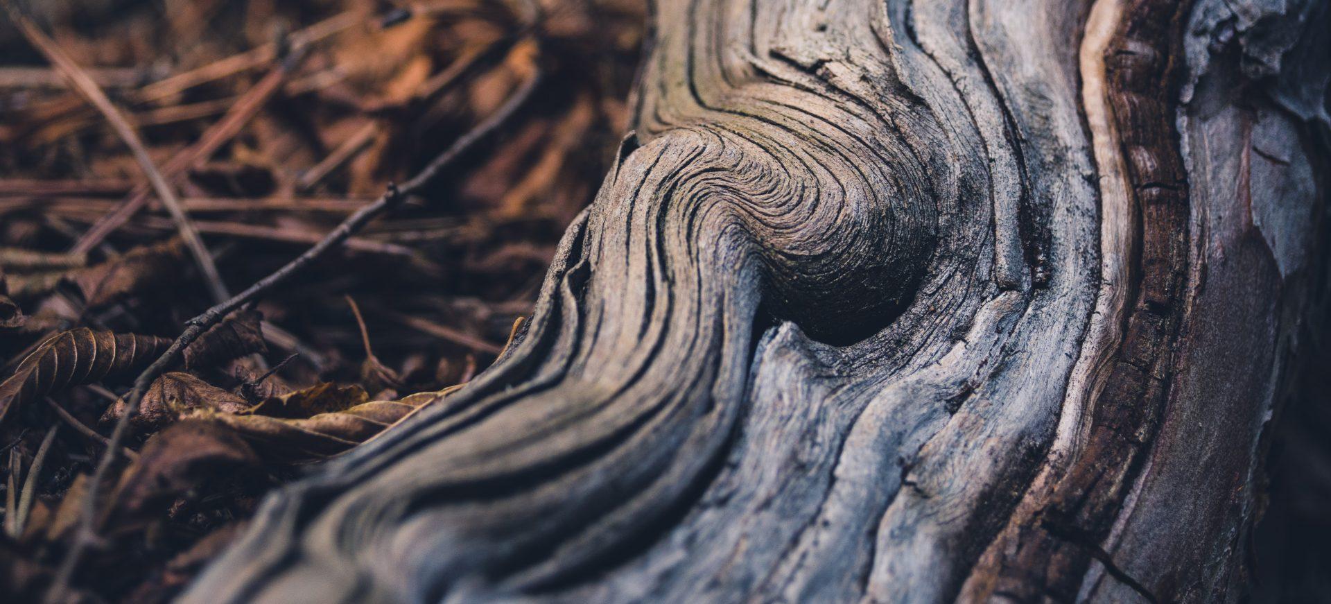 Les racines de Pando